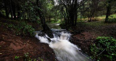 Se comprometen por la protección y restauración de las áreas naturales
